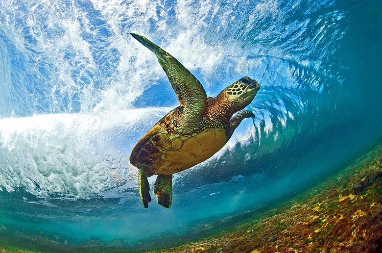 Черепаший перекат (Turtle Roll)