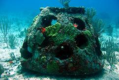 От искусственных рифов толку мало
