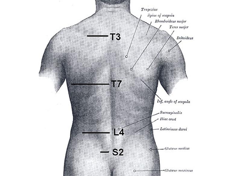 grays_anatomy-e1326066733528