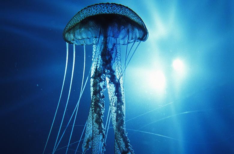 Школа выживания серфера: медуза