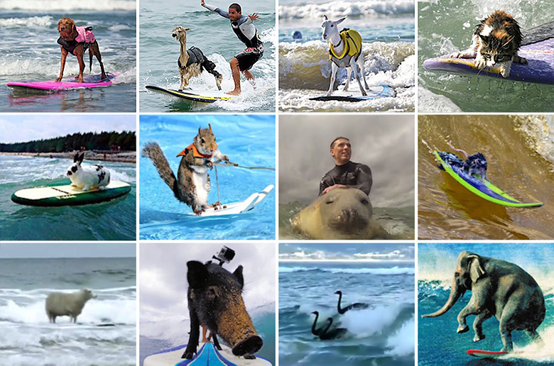Большая энциклопедия сёрферов животного мира