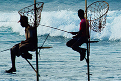 Страна для серф-трипа: Шри-Ланка