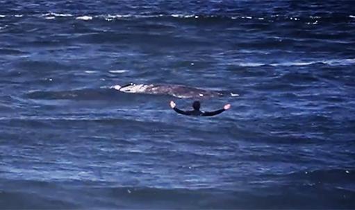 Насколько близко можно подплыть к киту?