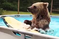 Медведь учится серфингу и радуется жизни