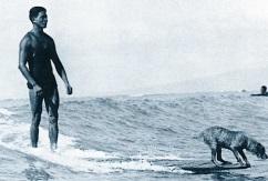 Четвероногие сёрферы